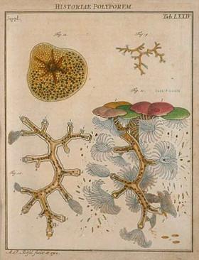 August Johann von Rosenhof, der monatlich herausgegebenen Insecten-Belustigung - 3